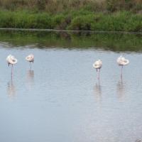 Le Clos Des Oiseaux
