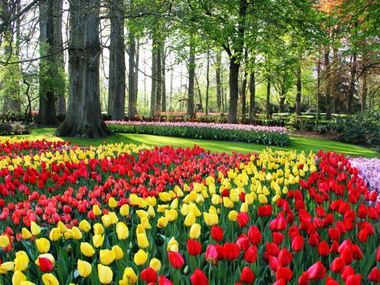 5 najlepszych miejsc ze względu na wiosenne kwiaty