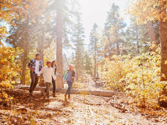 ヨーロッパの森で過ごす休日 TOP5