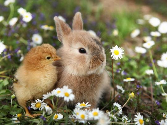 จุดหมายยอดเยี่ยมสำหรับการดูลูกสัตว์ในฤดูใบไม้ผลิ