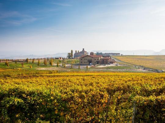 収穫期に訪れたいワイン名産地7選