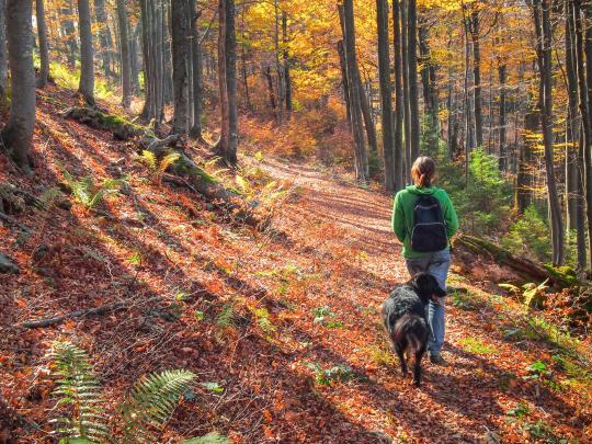 7 destinations pour vos animaux domestiques