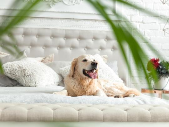 5 boutique hôtels où séjourner avec votre animal