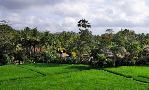 The rice terrace view