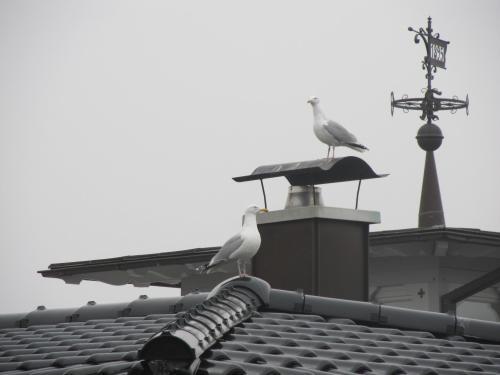 Auf den Dächern von Binz....