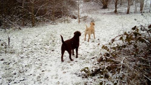 Millie & Maisie for Garry