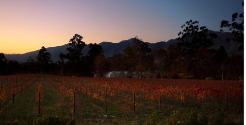 Stony Brook Vineyards