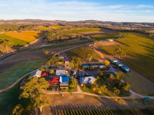 Longview Vineyard